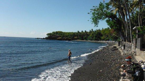 Paradise Palm Beach Bungalows : east beach