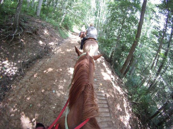Ridin through the woods - Picture of Sandy Bottom Trail Rides