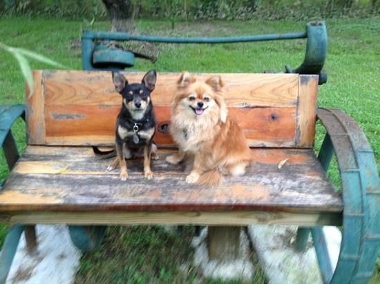 Barkwells, The Dog Lovers' Vacation Retreat: Ziggy & Zoey enjoying the Barkwells property
