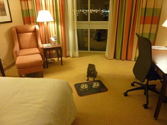 Sheraton Toronto Airport Hotel & Conference Centre: Sheraton Toronto Airport is pug approved!