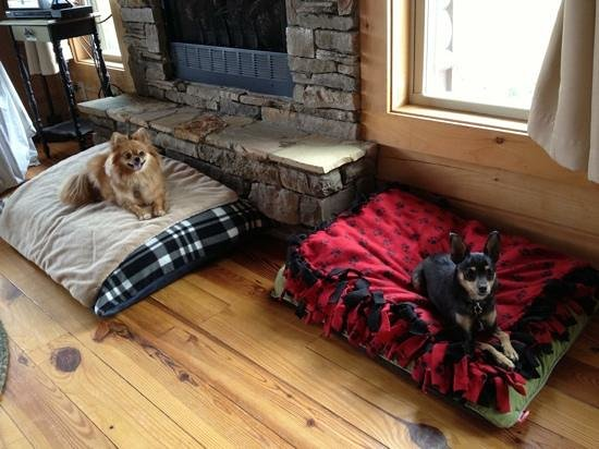 Barkwells, The Dog Lovers' Vacation Retreat: The pups getting comfortable @ Barkwells on the comfy beds