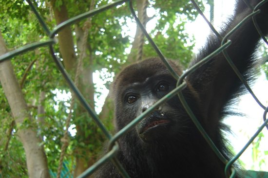 Hotel Ciudad Real Palenque: Scimmia