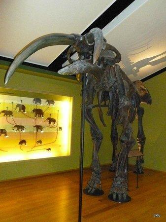 Naturhistorisches Museum: prehistoric mammoth bones
