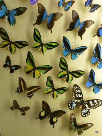 Naturhistorisches Museum: A huge collection and interactive butterfly display