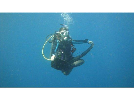 Poseidon Dive Center: Poseidon