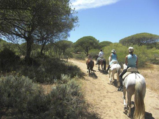 Rancho La Paz: im Pinienwald