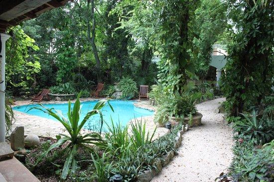 Casa Quetzal: le must de l'hotel: la piscine