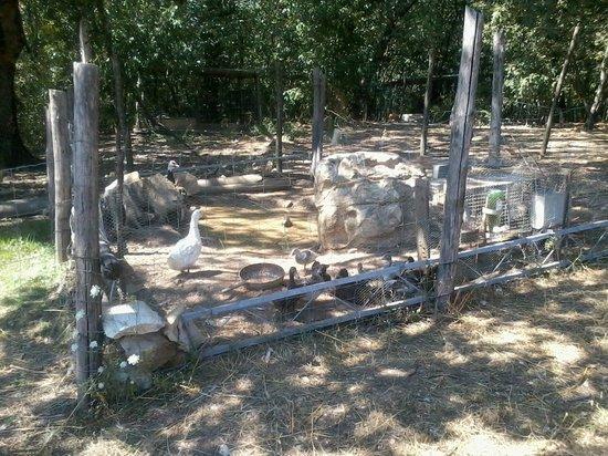 Agriturismo MassoSerpente: Animali