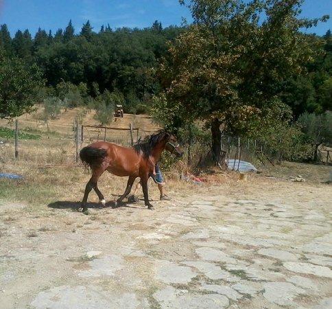 Agriturismo MassoSerpente: Il cavallo Ryan