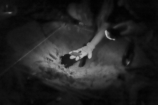 Los Cardones EcoLodge: naissance tortues