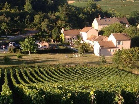 Domaine de la Combotte : looking into La Combotte through the Charles grapevines
