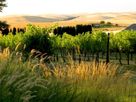 Walla Faces Inns at the Vineyard: Walla Faces Vineyard
