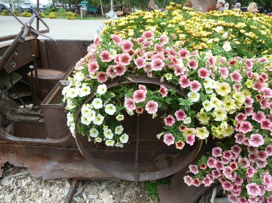 Flowers picture of chena hot springs resort pleasant valley chena hot springs resort flowers mightylinksfo