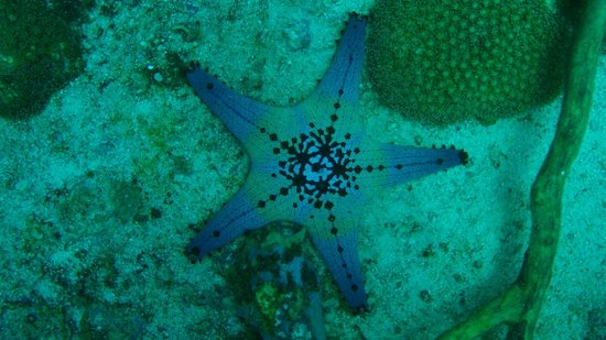 Thresher Shark Divers: Gato Island trip