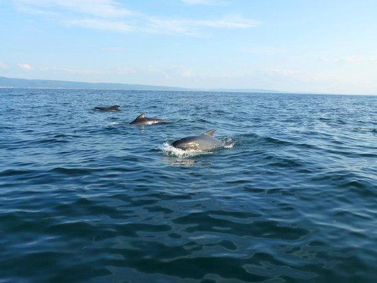 Love Boat Whale Cruises: rencontre avec les baleines noires