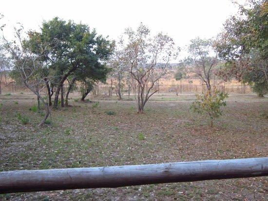 Nkambeni Safari Camp : Vista desde el deck de la tienda