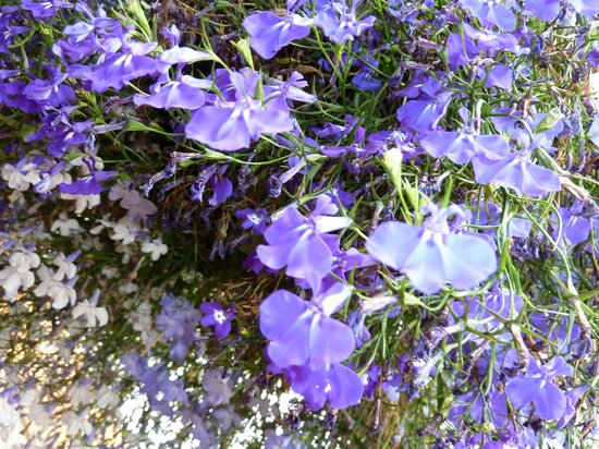 Kenai Princess Wilderness Lodge: Flowers everywhere