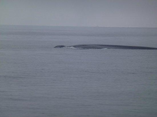 Dana Point, Californien: Big Blue again