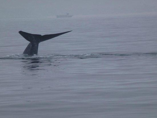 Dana Point, Californien: Dive, dive, dive