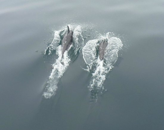 Dana Point, CA: More dolphins
