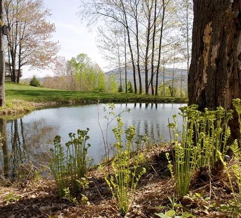 Upland Meadow House: our woodland pond