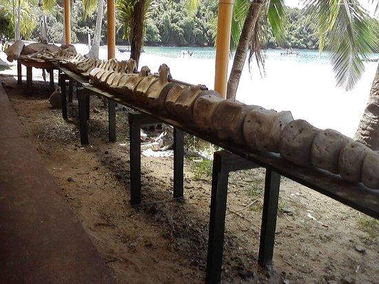 Coiba Island National Park: base camp