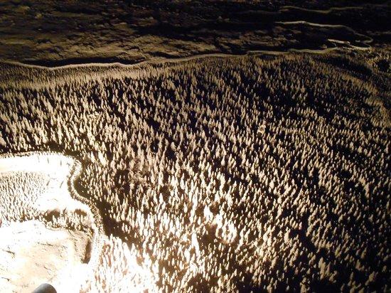 La Grotte de Trabuc : **