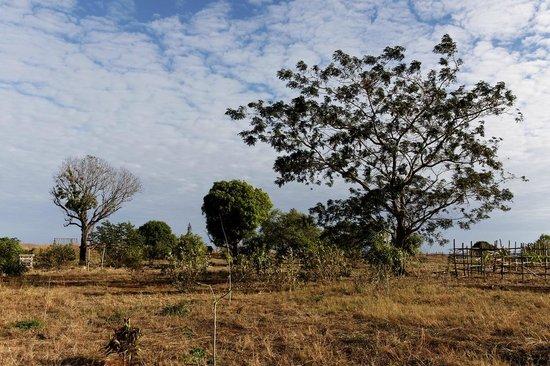 Le relais de l'ankarana: arbres de l'Ankarana
