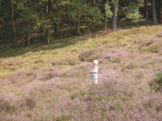 Nationaal Park Veluwezoom: op de heide bij de Posbank