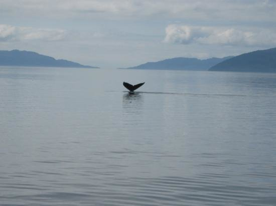 Cross Sound Express Whale Watching Image