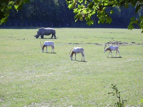 Parc Zoologique Cerza : plaine africaine