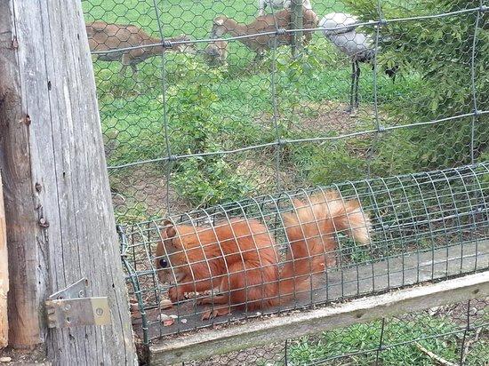 Wild Animals Park (Park Dzikich Zwierzat Kadzidlowo): wiewiórka sama przebiegła