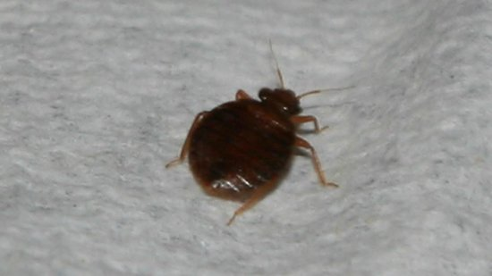 Hawkshead, UK: bed bug found in bed