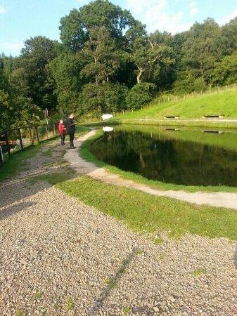 Lake View Cottage: childrens pond