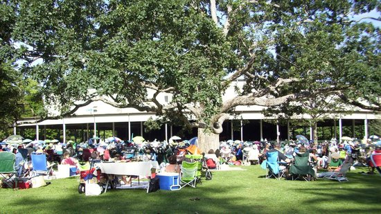 Tanglewood: Late afternoon lawn under the big Oak