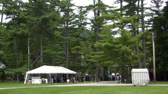 Tanglewood: The signiture lodgepole pines