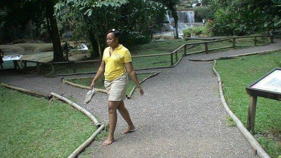 Jamaica Exquisite - Day Tours: YS Falls - St. Elizabeth