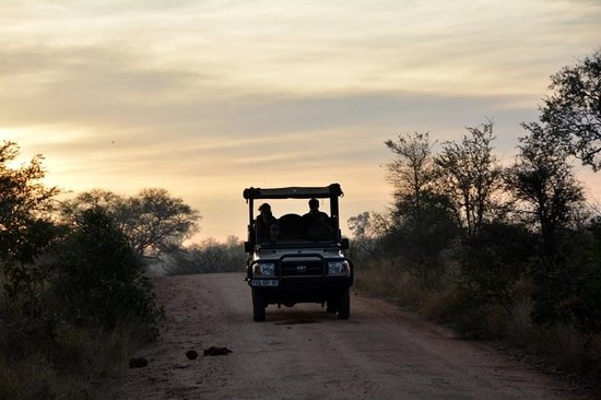 Hamiltons Tented Safari Camp: Safari