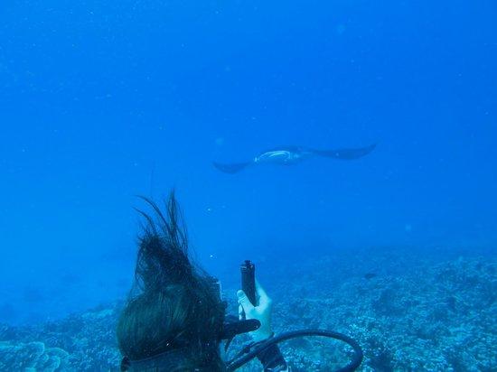 Diveasy : Plongée à Bora Bora avec les raies manta