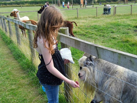 Playdale Farm Park: my fav was billy goat gruff we loved him