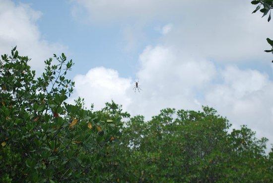 Deering Estate: Spider