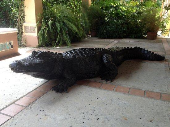 Alligator Cafe Near Me