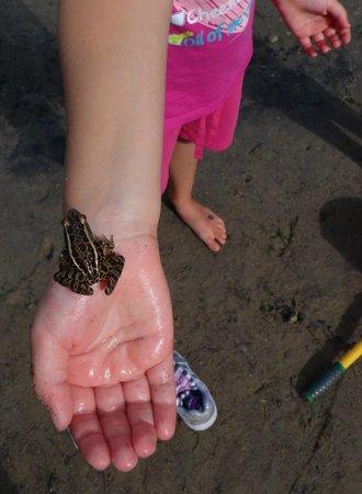 Charleston Lake Provincial Park : frogs
