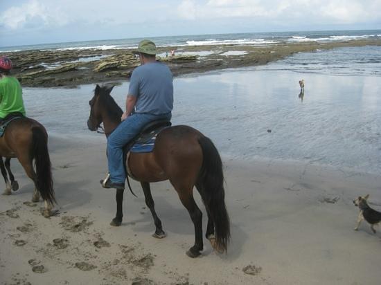 Playa Ponies: on the beach