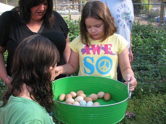 Canyon Farms RV Park : Collecting the morning eggs