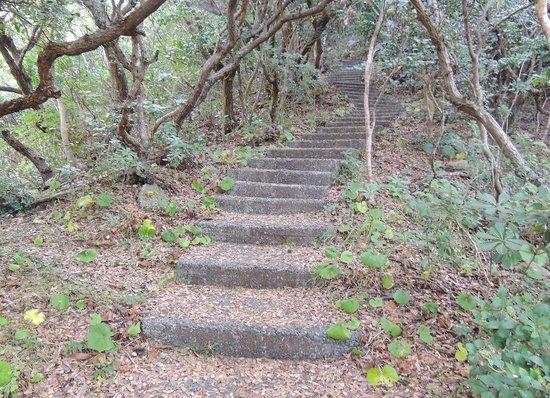 Usuebae Lookout: うっそうと生い茂る木々、薄暗い山道