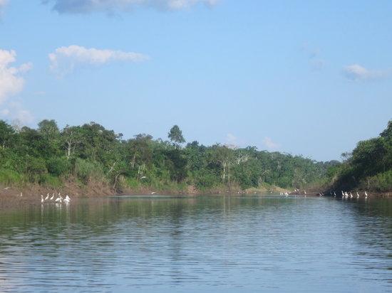 Pacaya Samiria National Reserve: paisaje natural
