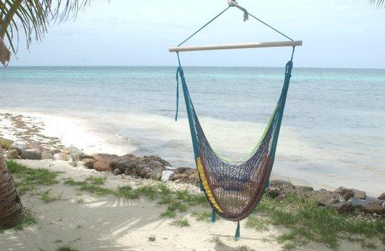 Hatchet Caye Resort: Hammock for relaxing