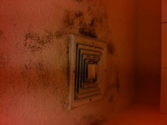 Extended Stay America - Nashville - Franklin - Cool Springs: mold