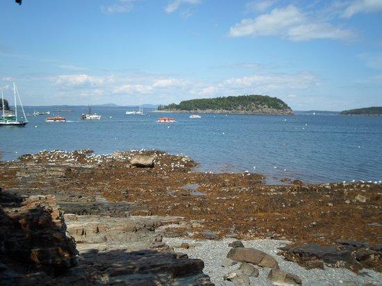 Shore Path: View of Harbor